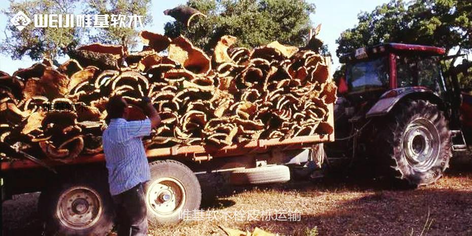 软木栓皮栎运输