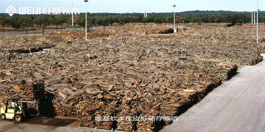 软木栓皮栎储存晾晒