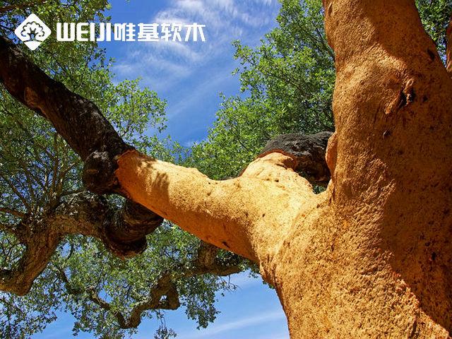 软木有哪些木材?